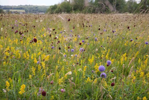 wildflower_meadow_thames