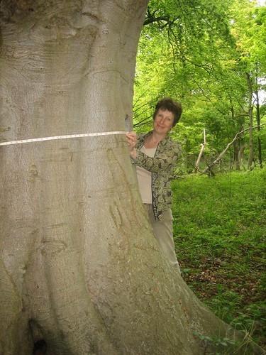 3 Sarah_measuring tree