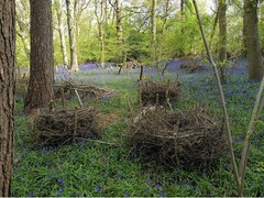 willow_wood