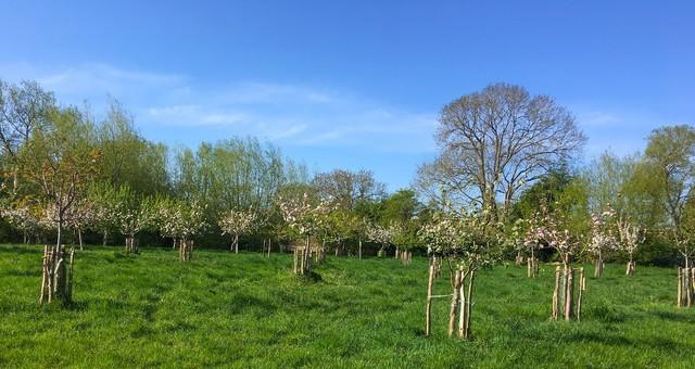 LongMead_orchard