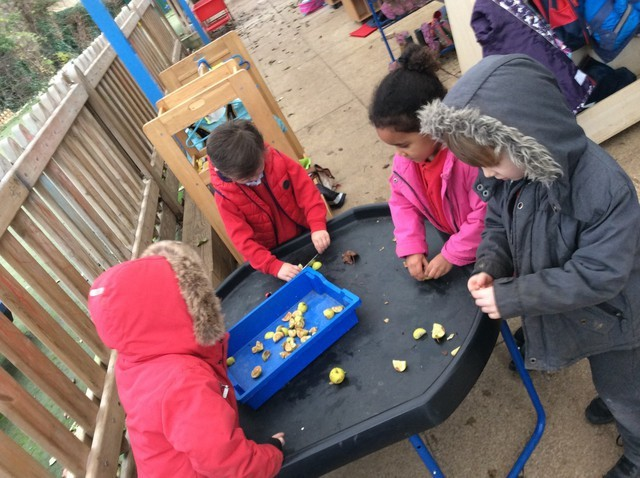 Seed Propagation Kindergarten